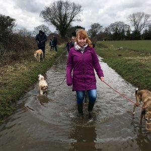 Nicole Volunteering at FAITH animal sanctuary